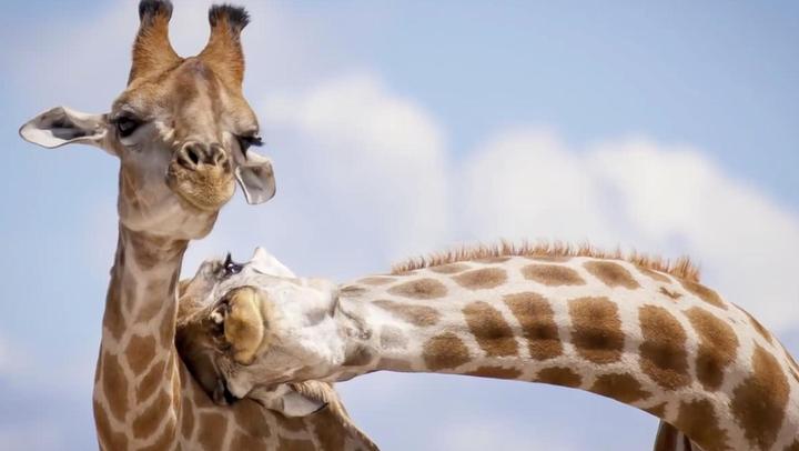 如何把动物拍得更有趣?摄影师教你五招